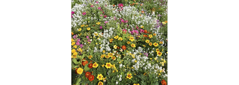 Blomster til bier